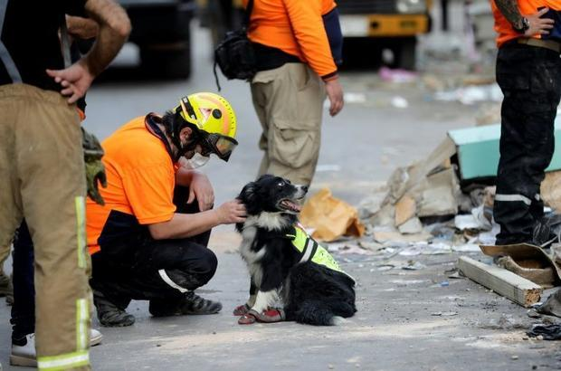 A Chilean rescue worker pets a sniffer dog as others dig through the rubble of a badly damaged build...