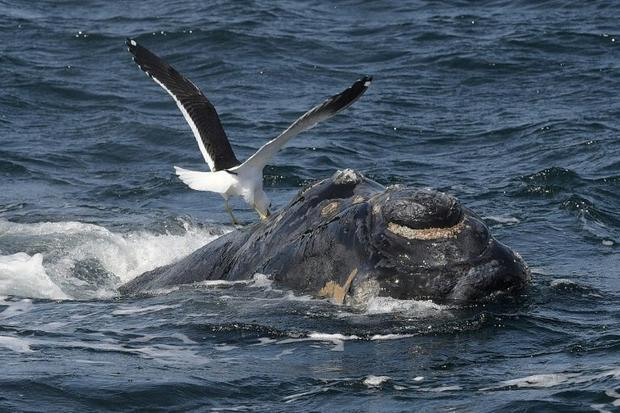 The South Atlantic Whale Sanctuary failed to get backing from a two-thirds majority of the Internati...
