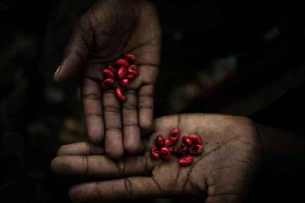A Pygmy shows berries he has picked that are believed to have medicinal properties
