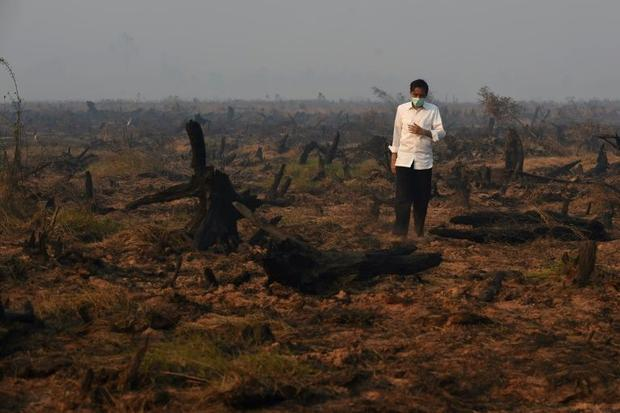 Indonesia's President Joko Widodo inspects a peatland clearing that was engulfed by fire in 201...