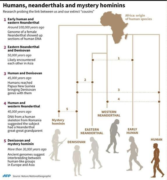 Humans  Neanderthals and mystery hominins