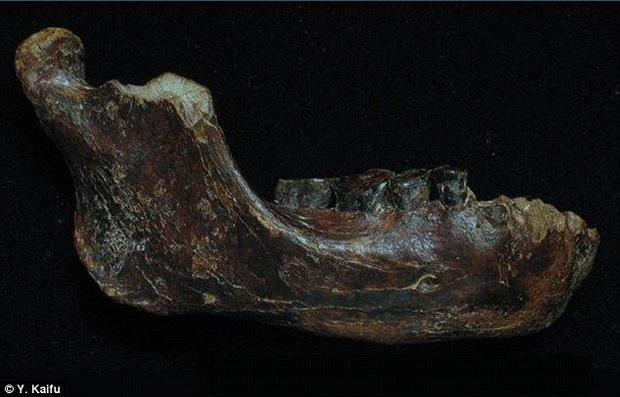 Jawbone of Penghu 1