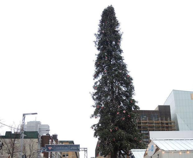 Not a Christmas goes by without at least one tree somewhere on the planet attracting the public's ...