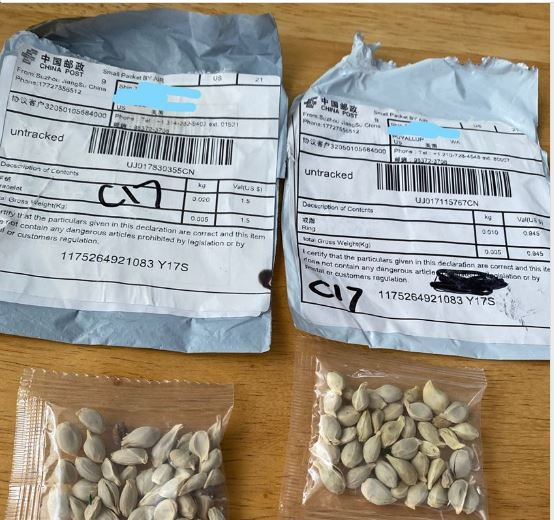 Images of unsolicited seeds and packaging.