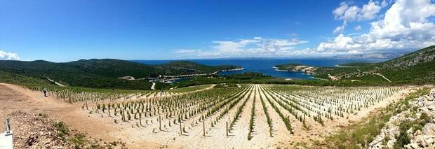 The new Bastijana winery north of Hvar Town is home to 14 000 organic Plavac Mali vines.