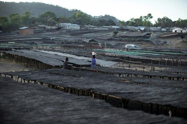 A Malawian fisherman walks through planks and table used to dry fish. Experts say declining fish cat...