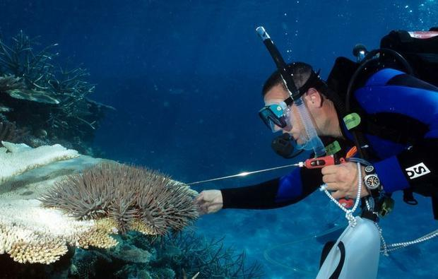 Killing COTS has been done by a single injection using divers. The COTSbot will take over this job.