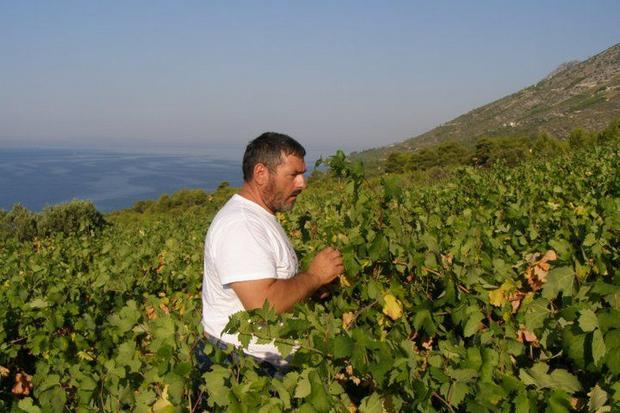 Croatia is making slow but steady progress bringing its wines into the Italian market. One of the ea...