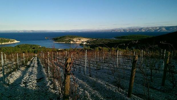 Apart from tourism  the Hvar economy is based on fishing and agriculture  and the vineyards - such a...